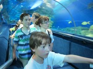 Hajtunnel i akvariet