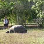 Landskildpadde og Lily
