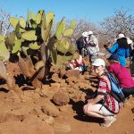 Kaktus - Opuntia sp.