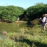 Vandhul med skildpadder